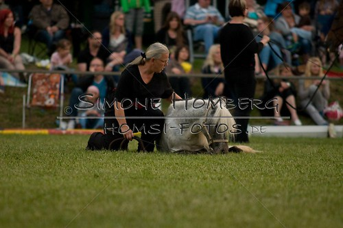(c)SimoneHomberg_Ponyfest_Schauprogramm_20150606_0868