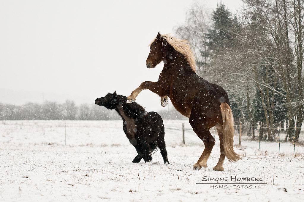 (c) Simone Homberg | HomSi-Fotos