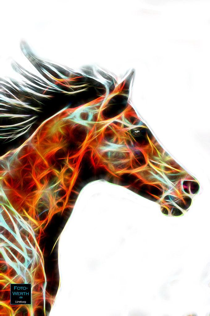 Special 01 - Pferd 04 WZ