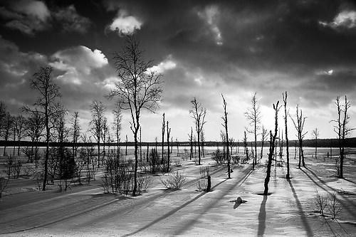 12_Eberl Harald_Nordische Baumlandschaft