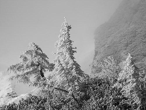 66_Pölzleitner Georg_Erster Herbstschneesturm im Gebirge