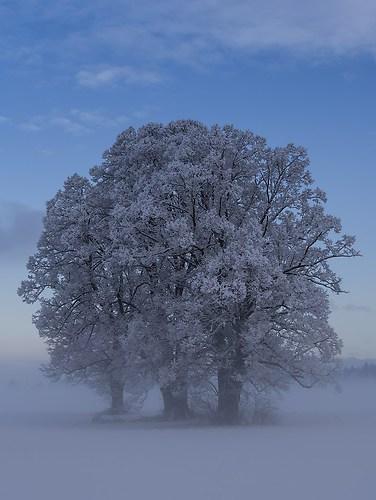 99_Strasser Martin_Frozen Tree