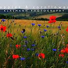 KLASMANN-poppies-cornflowers-2-1