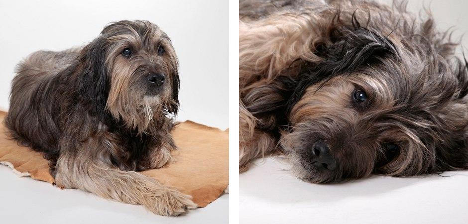 Hunde-Portrait