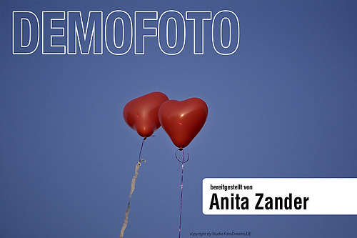 portfolio13