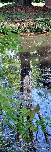 31 Spiegelbaum