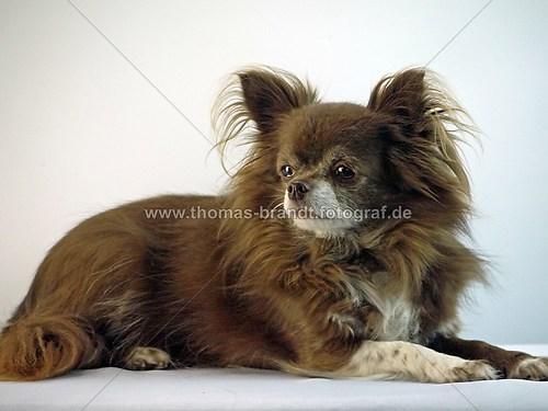 Hund Mandy (Hund Mandy_4)