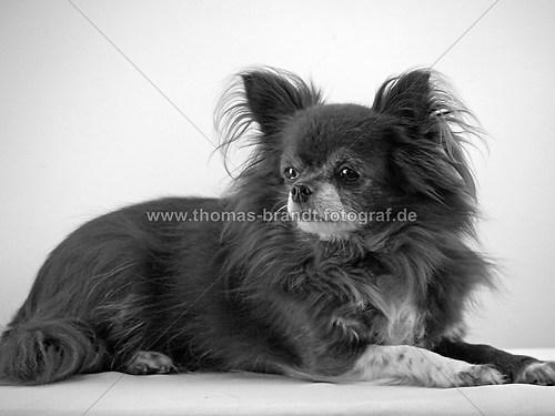 Hund Mandy (Hund Mandy_4_sw)