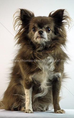 Hund Mandy (Hund Mandy_5)