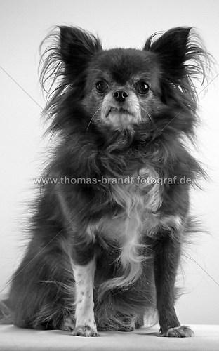 Hund Mandy (Hund Mandy_5_sw)
