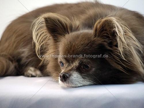 Hund Mandy (Hund_Mandy)