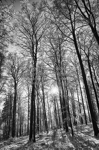 wald-hdr-sw