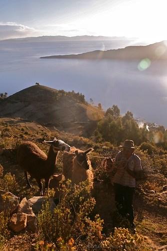 Bauer mit Lamas auf der Isla del Sol