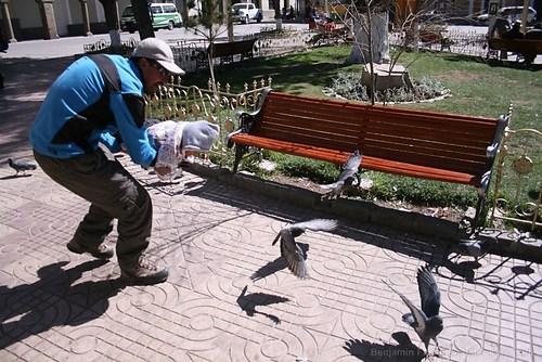 Leon auf Taubenjagt