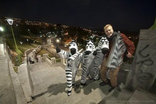 Wer braucht schon Zebrastreifen? Hier in La Paz regeln echte Zebras den Verkehr!