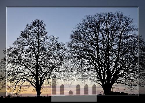 Bäume-01