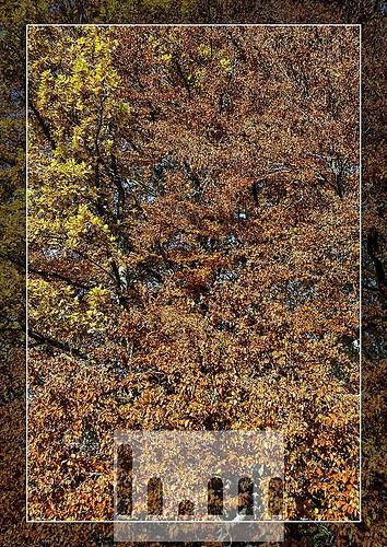 Herbstbäume-01