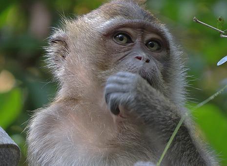 Bildoptimierung_Tierfotografie_Original