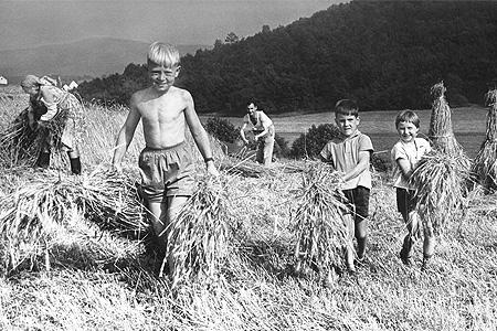 Landwirtschaft im Kreis Siegen