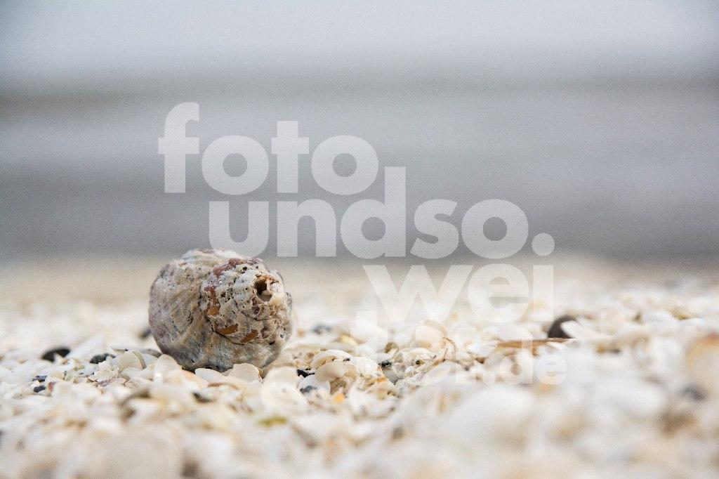 Muschel_Palmenstrand