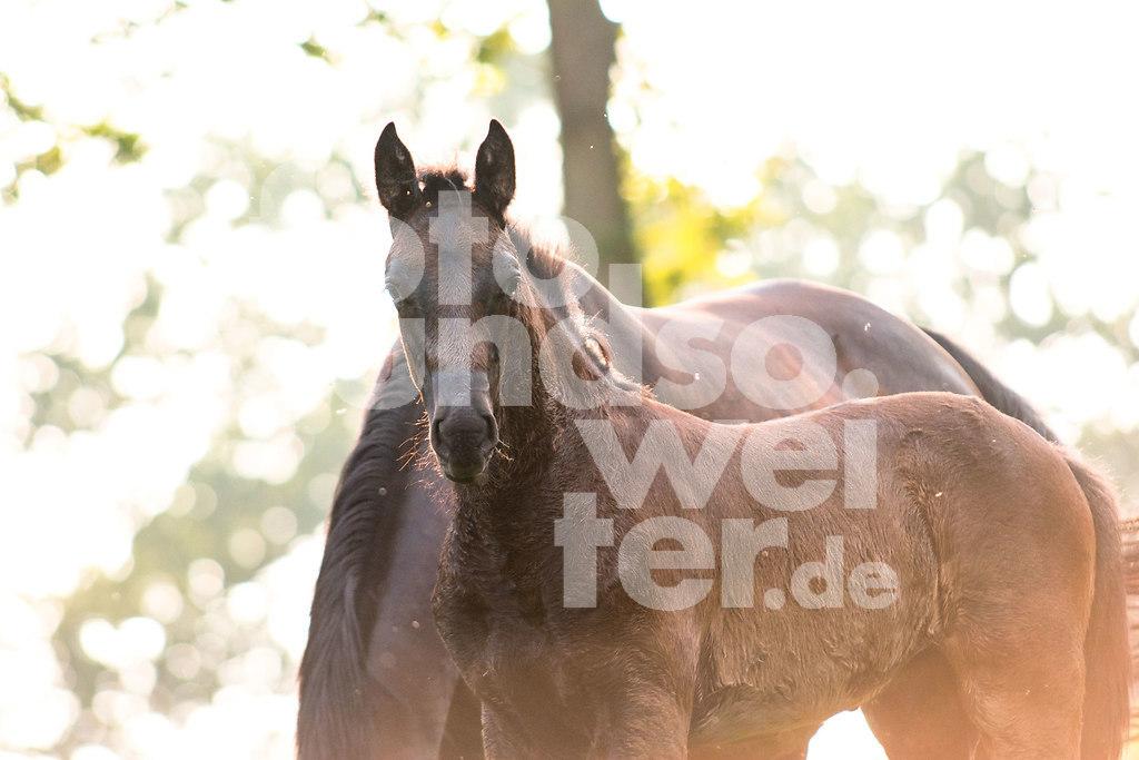 PferdeMaedels-115