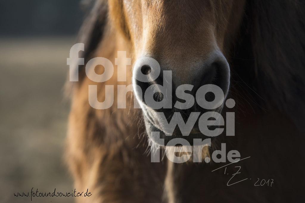 Pferdeschnute_I_hp