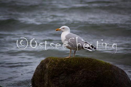 Unsere Ostsee (© OstseeShooting) (2 von 2)
