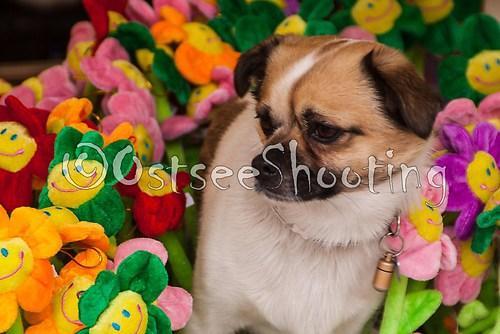 Hund im Blumenbeet (© OstseeShooting) (1 von 1)