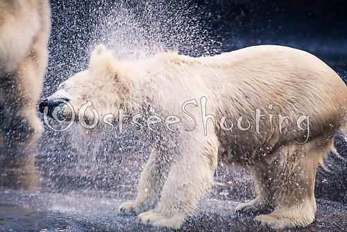 Zoo Rostock (© OstseeShooting) (1 von 2)