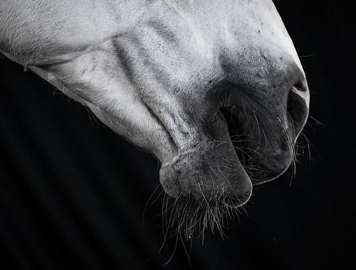 Pferdefotos Stall Hoove-5964Pferde