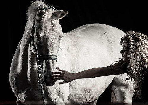 Pferdefotos Stall Hoove-6417Pferde
