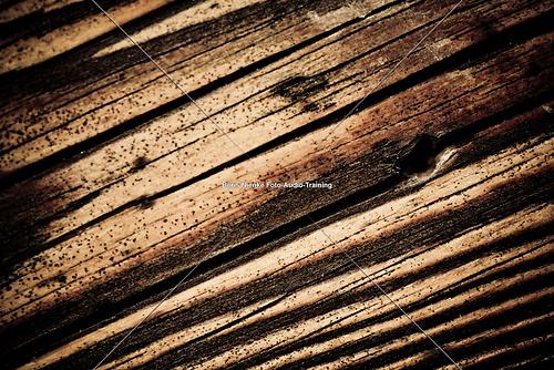 Holz (20110727_IMG_8311)