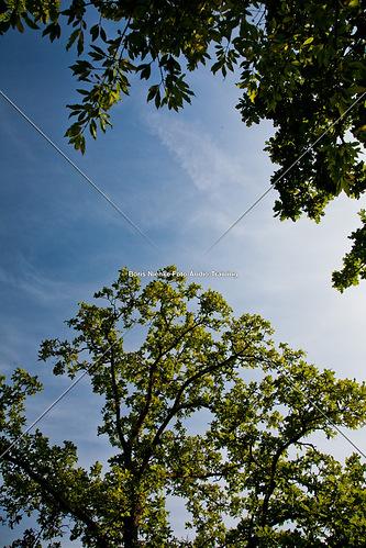 nach oben (20100902-IMG_6275)