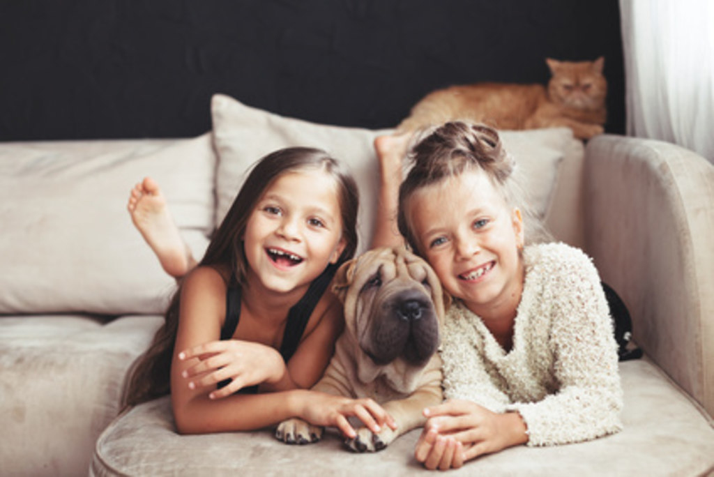 Children with pet (Fotolia_115666755_XS) | Home portrait of two cute children hugging with ginger cat and puppy of Chinese Shar Pei dog on... | pet, feelings, lovable, human, youngster, sofa, preschooler, life, playing, portrait, cute, lifestyle, girl, still, dog, pedigreed, breed, relax, people, loving, childhood, home, resting, owner, kids, children, comfortable, comfort, hug, animal, relaxation, black, fun, friendship, chinese, shar, pei, wall, interior, room, indoor, puppy, sitting, living, family, sisters, siblings, twins, cat, ginger, pet, feelings, lovable, human, youngster, sofa, preschooler, life, playing, portrait, cute, lifestyle, girl, still, dog, pedigreed, breed, relax, people, loving, childhood, home, resting, owner, kids, children, comfortable, comfort, hug, animal, relaxation, black, fun, friendship, chinese, shar, pei, wall, interior, room, indoor, puppy, sitting, living, family, sisters, siblings, twins, cat, ginger