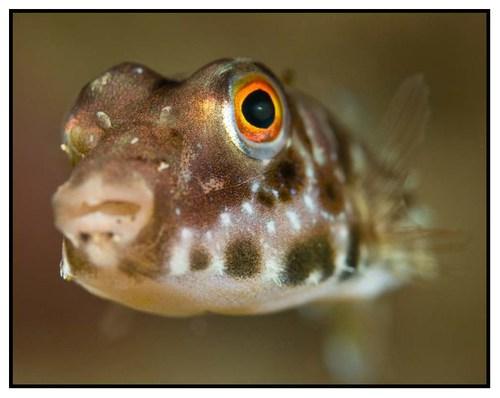 fish-portrait-5-copy