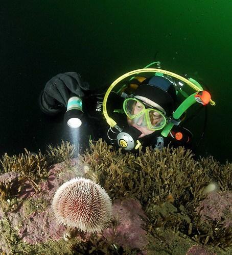 martin-with-sea-urchin