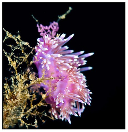 nudibranch-3-copy