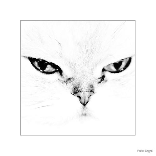 White Cat (diefotofabrik.de_0002-2)