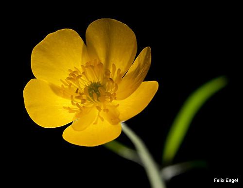 gelbe Blüte (diefotofabrik.de_0033)