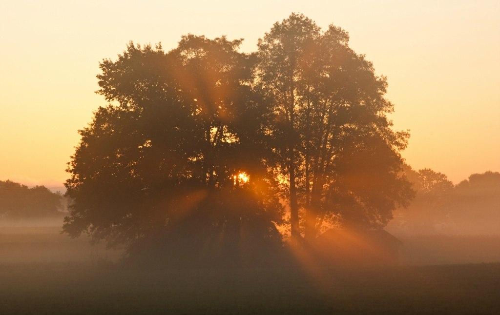 Baum im Sonnenaufgang02-0910
