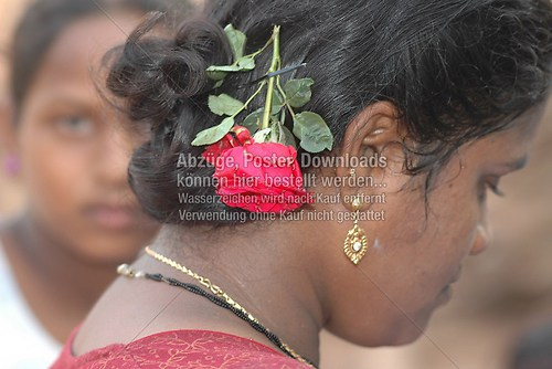 Indische Rose