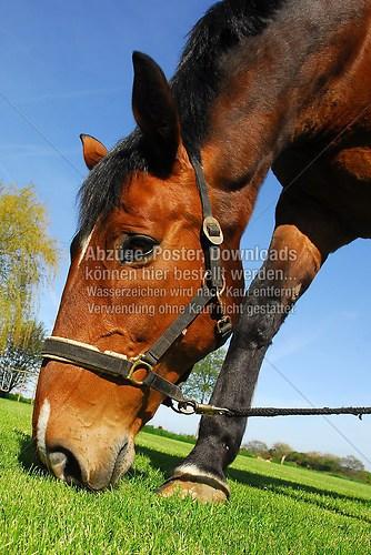 Horse-002