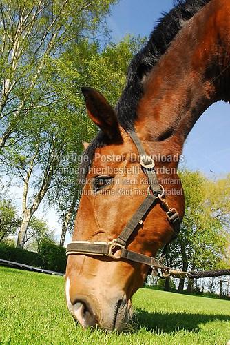 Horse-003
